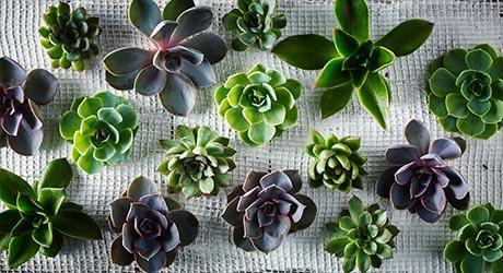 succulent flowercards