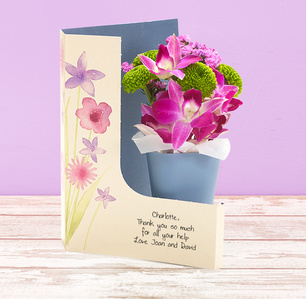 Product_tile_3col_yl03743-orchid-grace-web