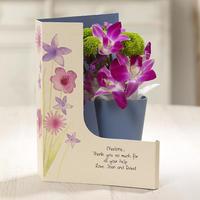 Orchid Grace