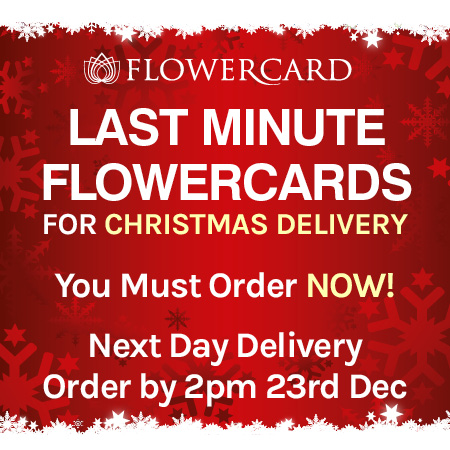 Hurry Last Orders for Christmas Delivery - Next Day Delivery Order by 2pm 23rd December